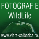 fotografie wildlife